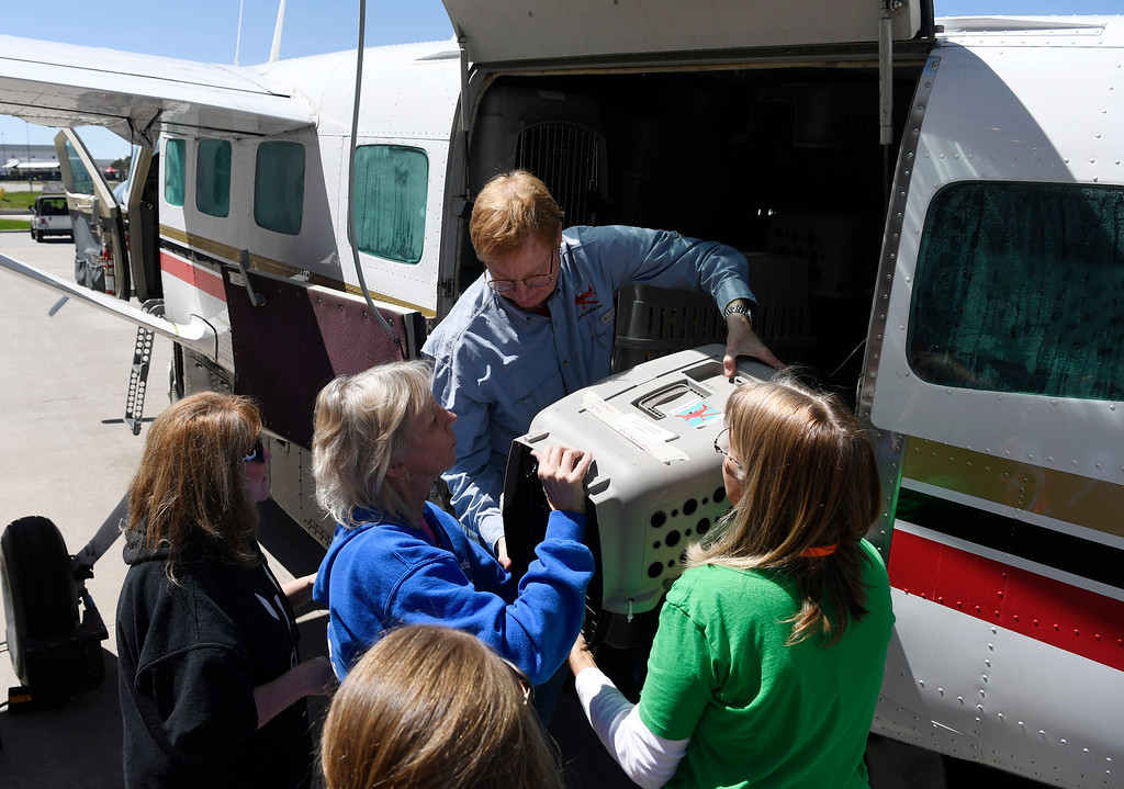 . Dog is My Copilot president/founder and pilot Peter Rork helps to unload rescued dogs and cats at the TAC Air hanger May 04, 2016. (Photo by Andy Cross/The Denver Post)