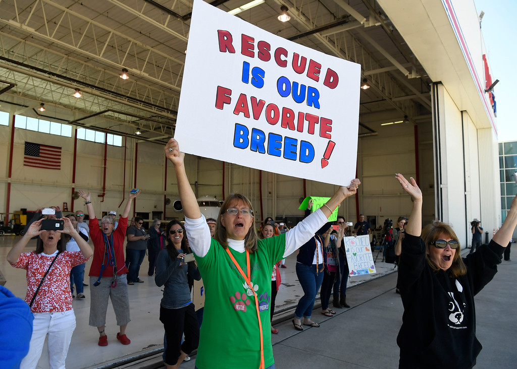 . Melanie Fisher, center holding sign, with Dogs on the Ground, along with several others, cheer the arrival of the Dog is My Copilot airplane at the TAC Air hanger May 04, 2016. (Photo by Andy Cross/The Denver Post)