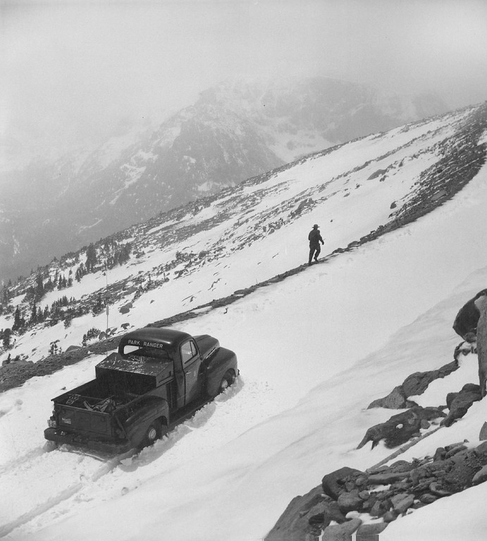 . Ranger Gordon Patterson walks ahead of his stalled truck, six miles from the summit of Trail Ridge road, to check the deep snow which made it impossible to open the link between Estes Park and Grand Lake in 1955. (Denver Post Library photo archive)