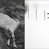 LEFT: June 16, 1965 - A sheep was killed by flooding along S. Parker Rd. (David Mathias/The Denver Post) RIGHT: A bull was killed in the flood at a ranch near Milliken, September 16, 2013. (RJ Sangosti/The Denver Post)