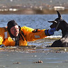 APTOPIX Dog Ice Rescue