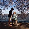 APTOPIX Cherry Blossoms