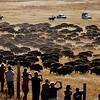 APTOPIX Buffalo Roundup