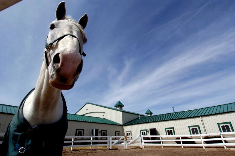 Colorado Horse Park