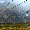 Rain and Lightning 2