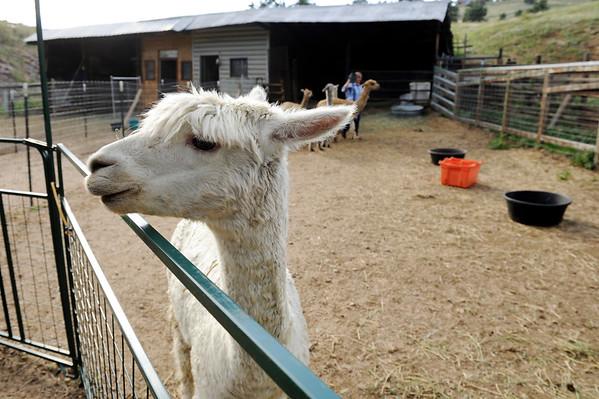 2014-09-16 Alpaca ranch