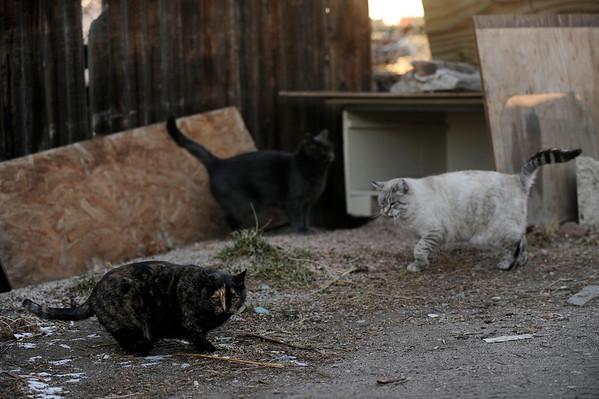 2014-12-29 Feral Cats