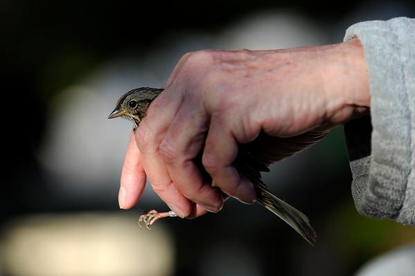 2015-05-05 Bird Banding