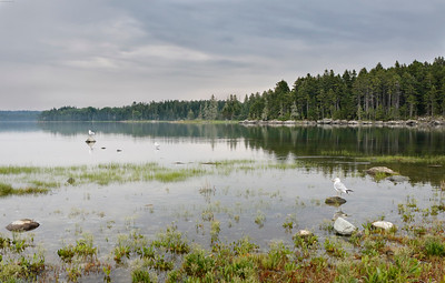 Serene lake with Ring Billed and Herring Gulls