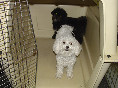 Dog Daycare 2004