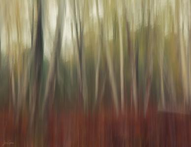 White Birch Blur