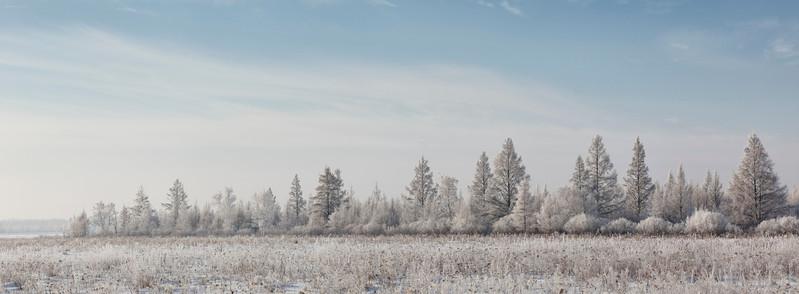 Hoar frost near McGregor, MN