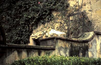 Mordehai Ruth Yaffa Safta at the zoo