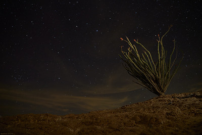 Anza--Borrego Night Sky