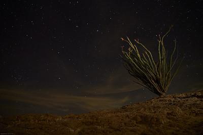 Anza--Borrego Night Sky