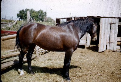 Miserable horse that I would ride, on the farm in Lake Shore Ut. 50s