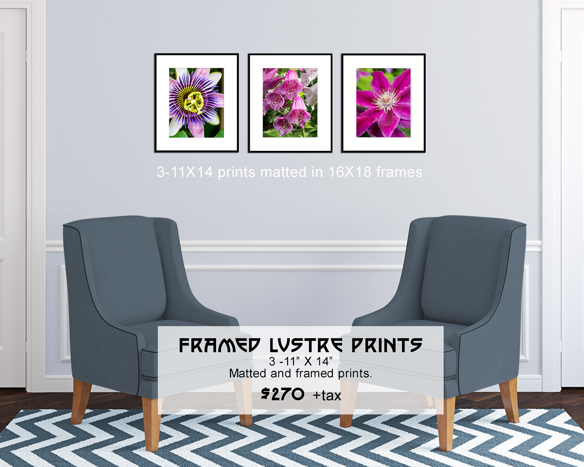 Floral_Triptych_11X14_framed_full_color