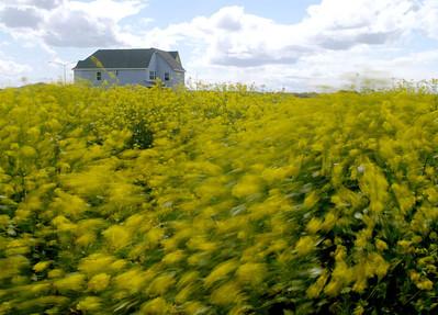 Windy Weeds