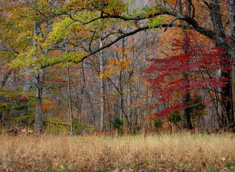 Fall trees surrounding the inner meadow.