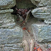 Can you see the reclining root-man?  Look closely.  Even better; can you find him at Old Stone Fort?  I bet you can...