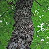 Bumpy Tree