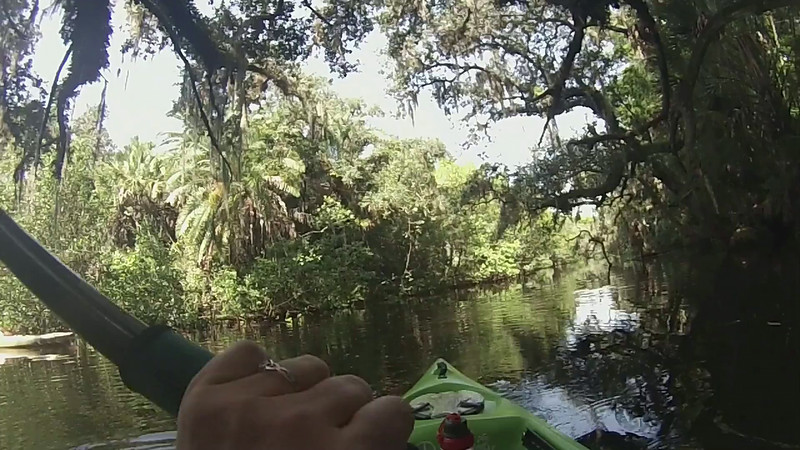 Parrot Heads Kayaking on the Estero River