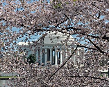 Jefferson Memorial framed in cherry blossoms