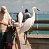 on the fishing pier at Lighthouse Beach, Sanibel Island