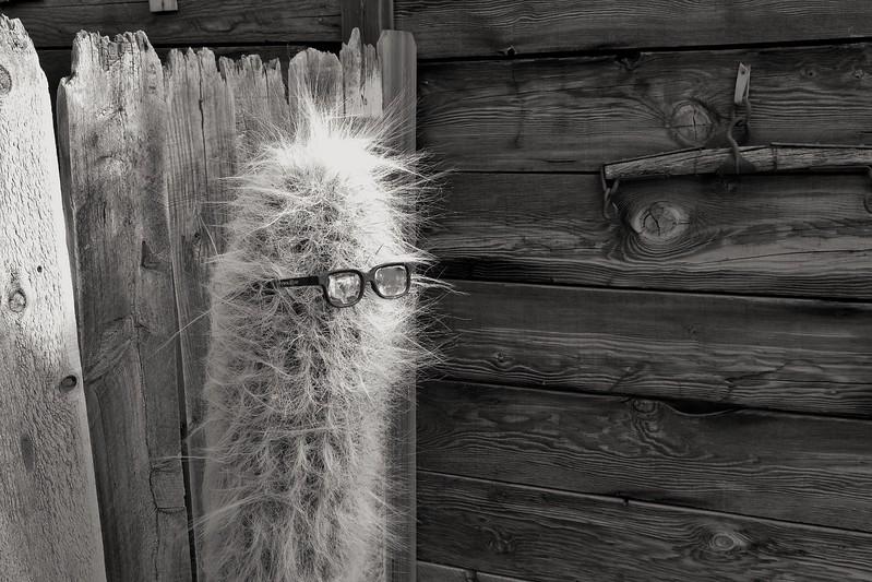 Cactus with Specs