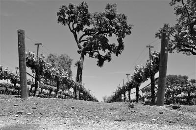 Blackjack Ranch Vineyards and Winery