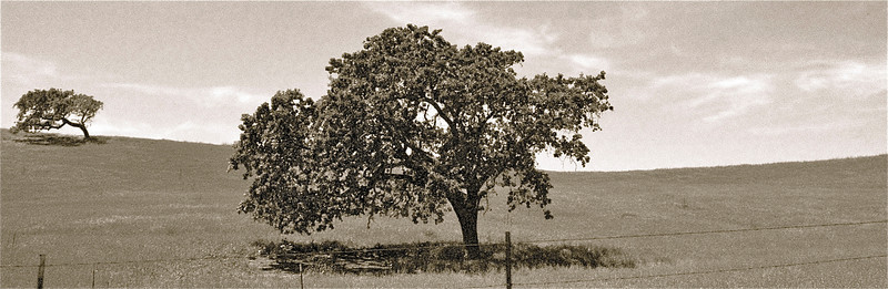 """Los Olivos, CA This photo must be ordered 10"""" x 30"""" to avoid cropping."""