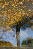 A Tree Grows in a Puddle