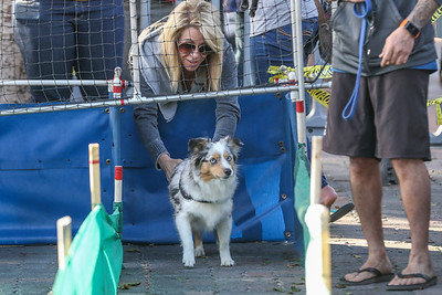 Winter Wonderland Dog Race Classic at The OldWorld German Restaurant
