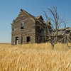 Abandoned farm house near ripe wheat.
