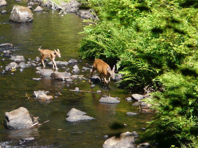 This pair crossed the creek and then used the trail less than 30 yards ahead of us.