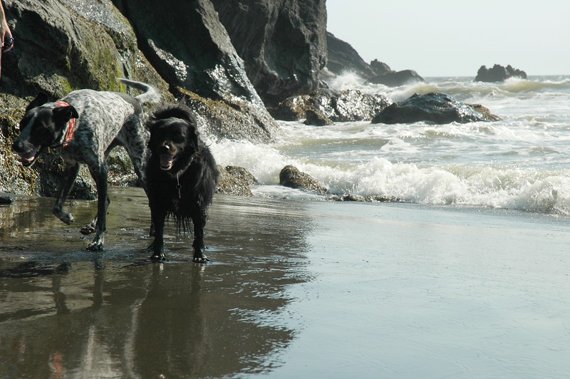 Winston had so much fun playing on the beach, he sprained his tail.