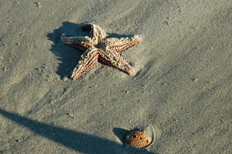 Spotted on Folly Beach.
