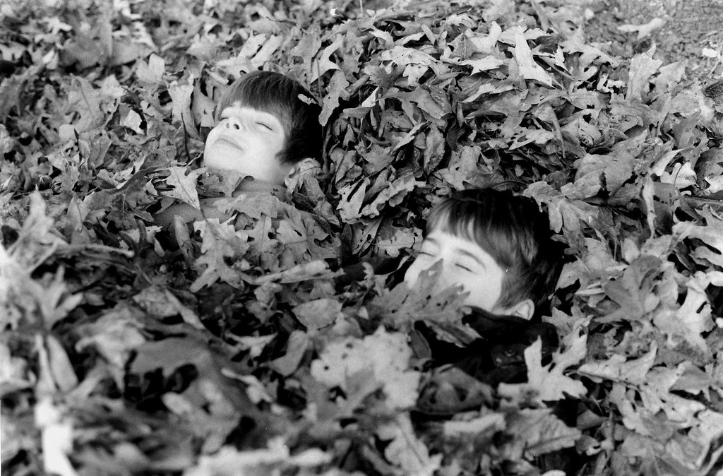 Brothers in leaves
