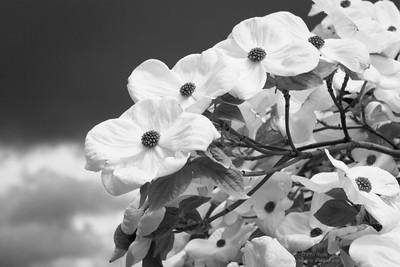 Springtime-6116