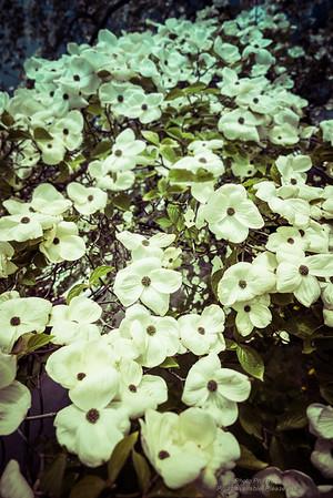 Springtime-6120