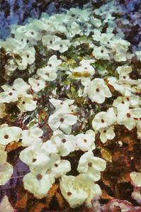 Springtime-6120_DAP_Camille