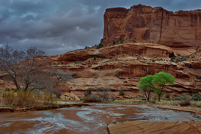 Green Trees - Canyon de Chelly