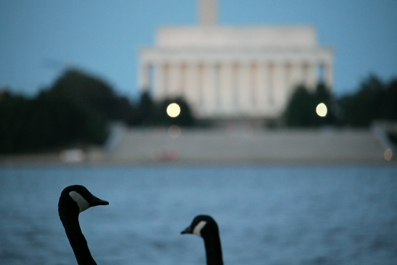 geese with Lincoln Memorial