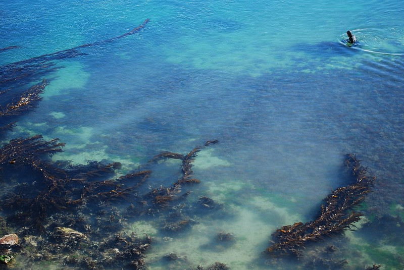 """At filming """"Vegetables of the Sea""""<br /> <br /> Aotearoa, Fall 2009"""