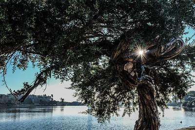 Lake Merritt Starburst