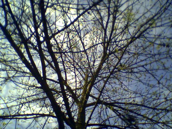 Tree Fascination