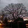 Favorite Tree At Sunrise