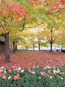 The trees were pretty.
