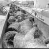 FED_WireMill_Cont Stpl_RRcars_073063-3