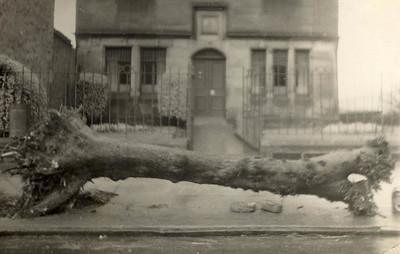 bv Last tree (museum) 1959